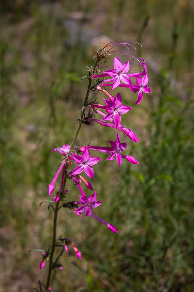 Grand Canyon North Rim Flower