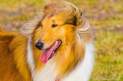 2012-Corpus Christi Dog Group