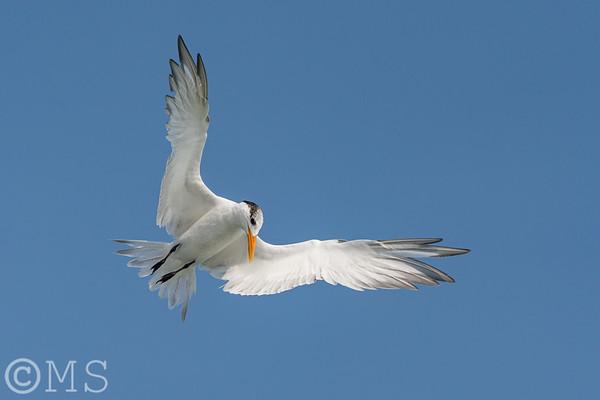 Tern Image Gallery