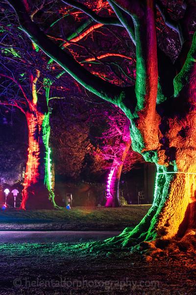 Illuminated Winter Wonderland by night-3.jpg