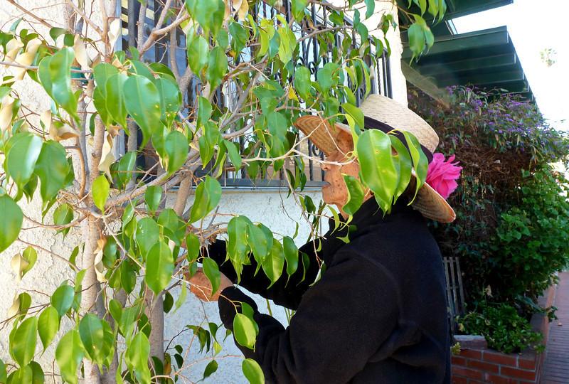P1010700 Navora in her garden.jpg