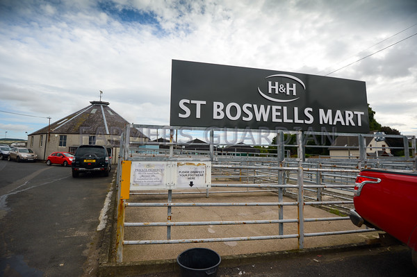 St Boswells sheep sale Sept 1st 2016