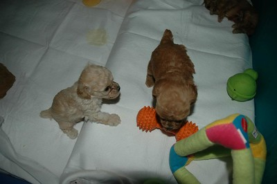 Our Past Puppies