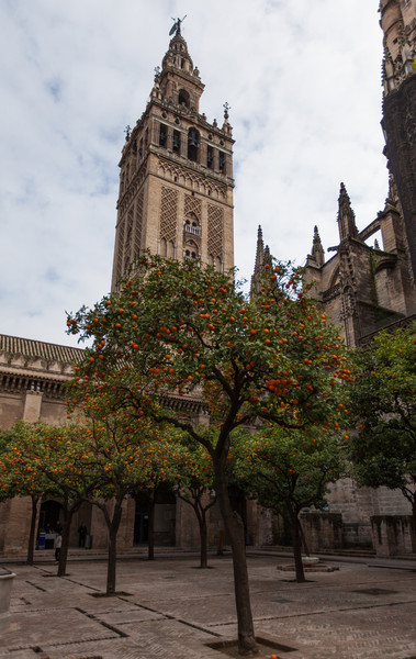 A view of the Giralda bell tower (minaret from the mosque formerly located here) from the Patio de los Naranjos.