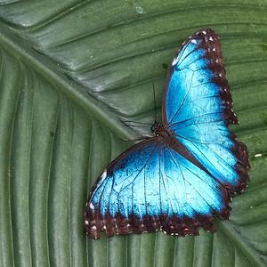 2018-03-29-Niagara-Butterflies