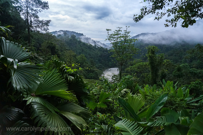 Pacuare Through the Green