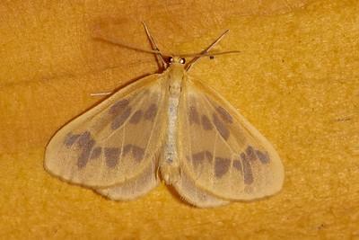 Sept. 5, 2021 - Moths-1