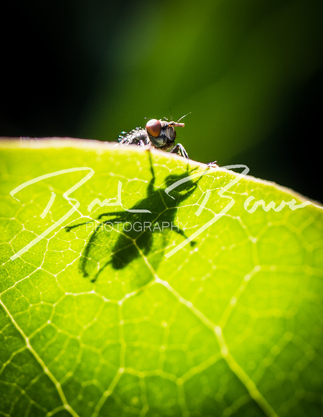 peekingfly-1.jpg