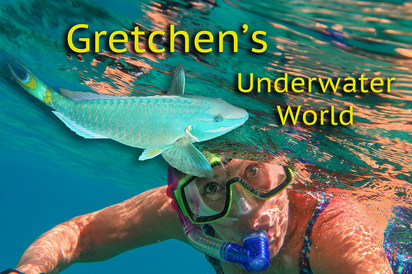 Gretchen's Underwater World