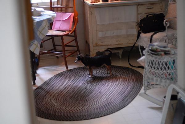 Jackson , Wilson & Tiki (DOGS) 8-22-09