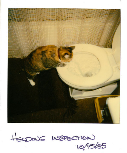 Polaroid_0065-XL.jpg