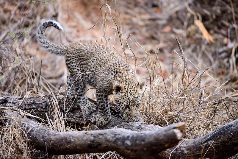 LeopardHills-20150827-5065.jpg