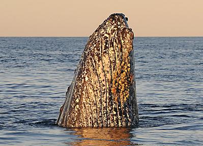 08_Whale Watching & Fishing Trip