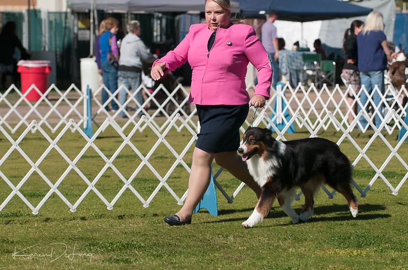 20170205_Australian Shepherds_Lost Dutchman Kennel Club-55.jpg