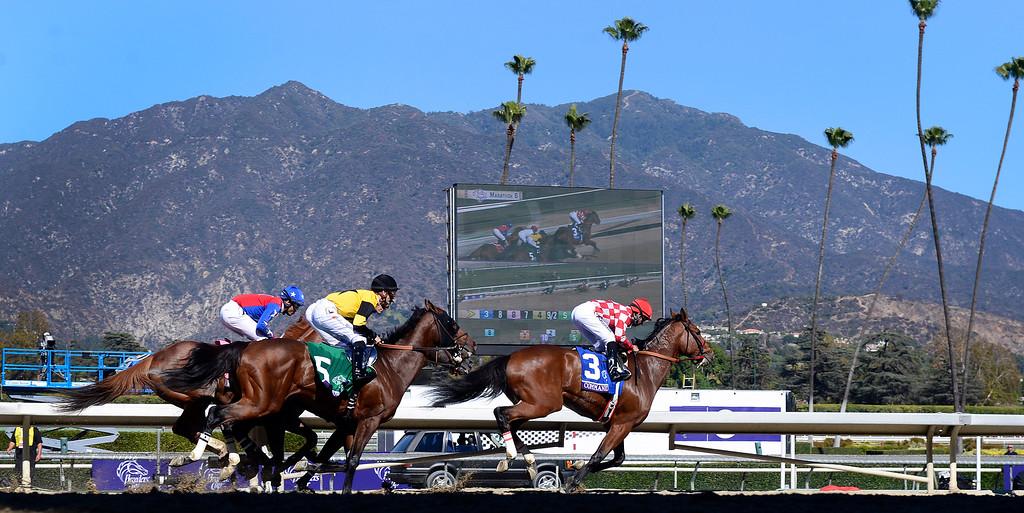 . The Breeders\' Cup is held at Santa Anita Park in Arcadia Friday November 1, 2013. (Photo by Sarah Reingewirtz/Pasadena Star-News)