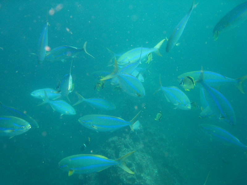 Diving in the Galapagos (200 of 392)