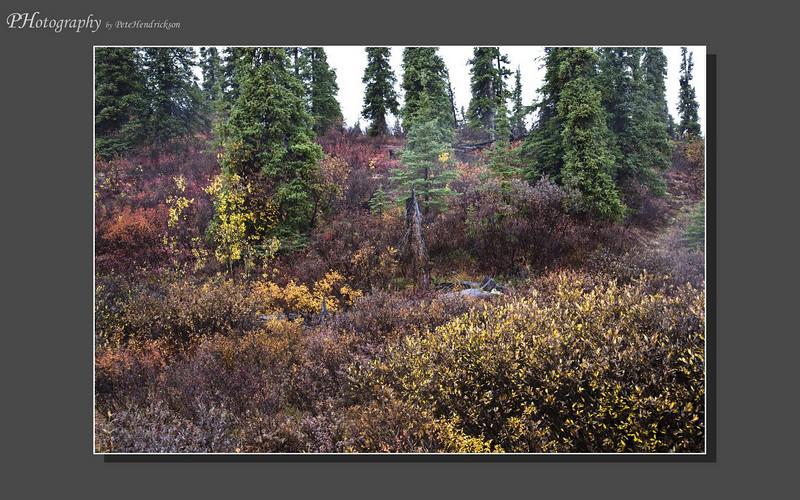 My Alaska 12-08-048.jpg