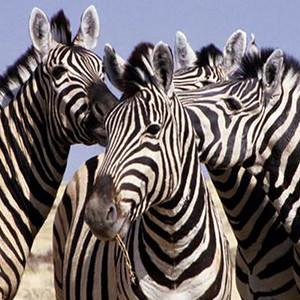 2000 - Namibia - Etosha