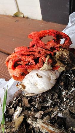 2011 Fungi, etc
