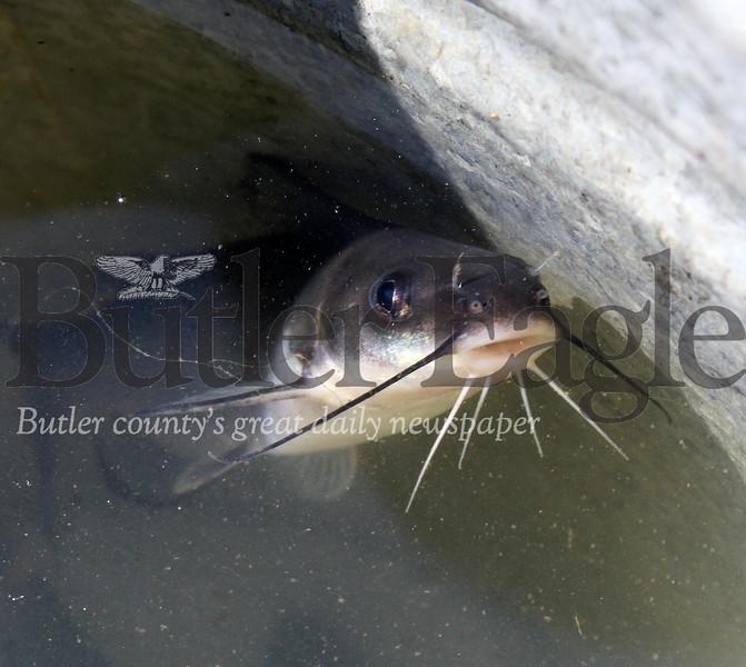 0429_LOC_Catfish_4.jpg