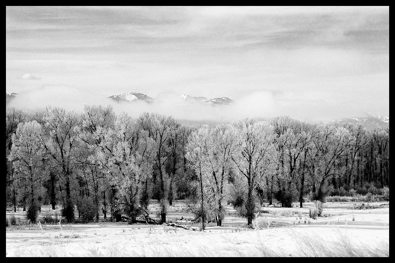 1--frosty-trees-B+W.jpg