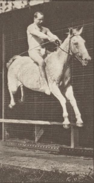 Horse Pandora jumping a hurdle, bareback with nude rider