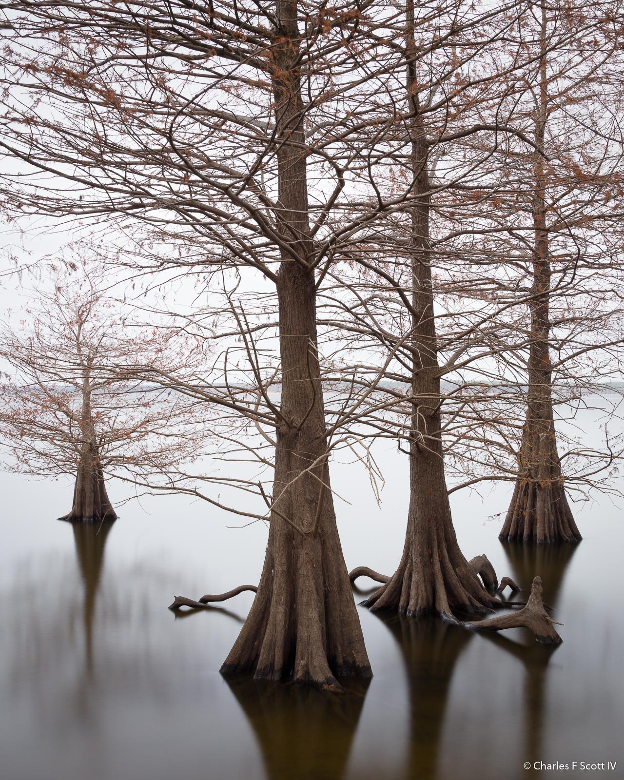 IMAGE: https://photos.smugmug.com/photos/i-78V7jZm/0/eb5e3980/O/i-78V7jZm.jpg