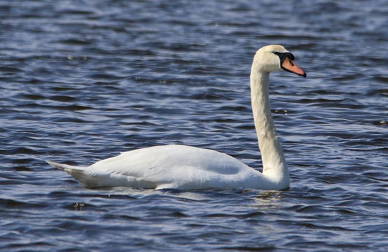 swan 2020 9_edited-1.jpg