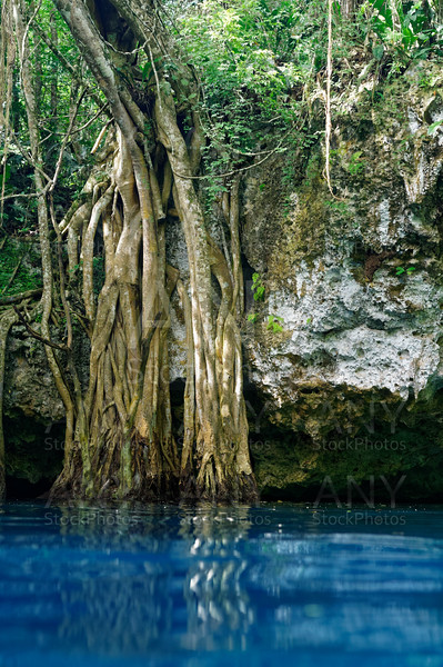 Cenote sinkhole in rainforest mayan jungle