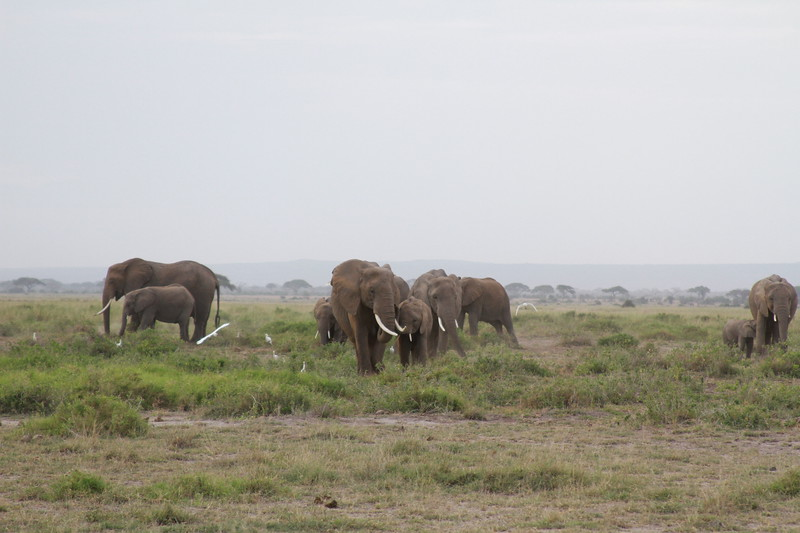 Kenya 2019 #2 420.JPG