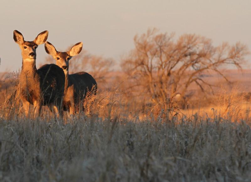Deer hunt  111.jpg