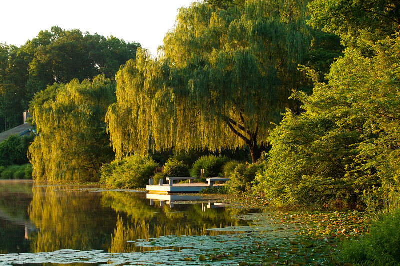 Lake Newport weeping willows