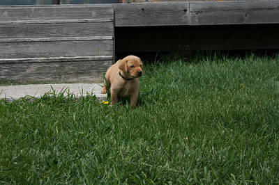 First Time Playing Outside