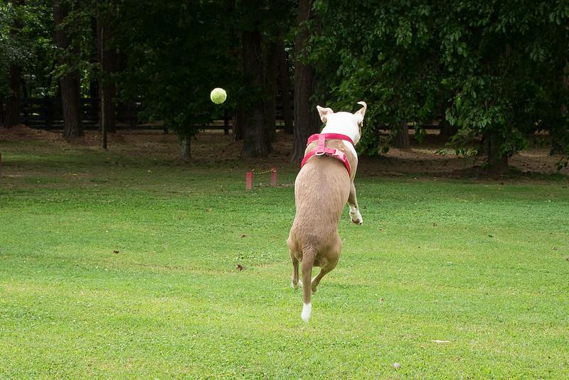 chasing the ball--8.jpg