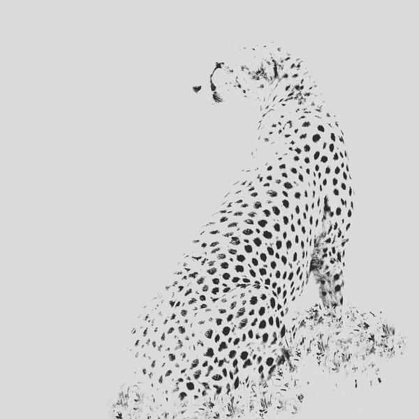 AF1T7856-Cheetah-Edit_spots2.jpg