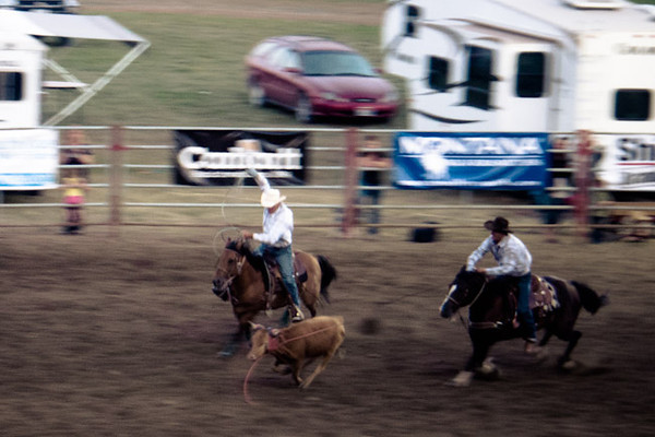 rodeo calf looping.jpg