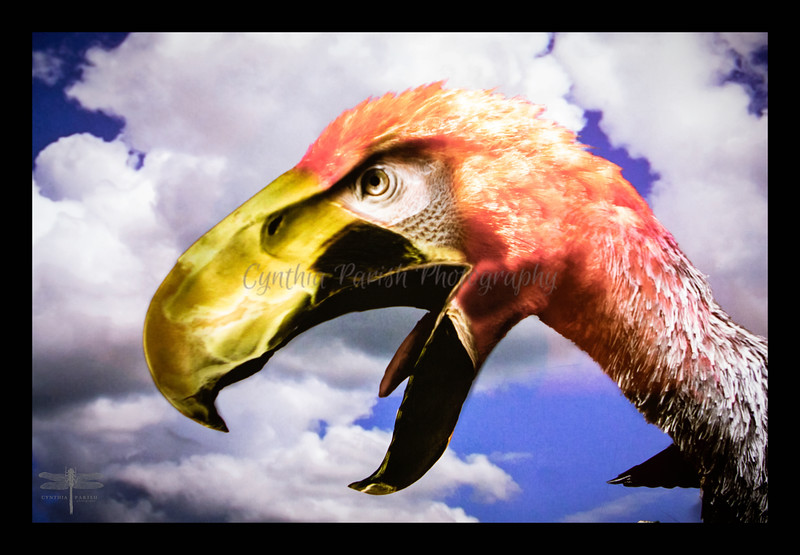 BigBird_cpp.jpg
