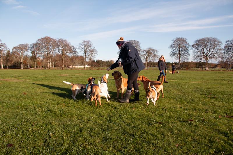 Beagle walk Hazlehead  Park Aberdeen