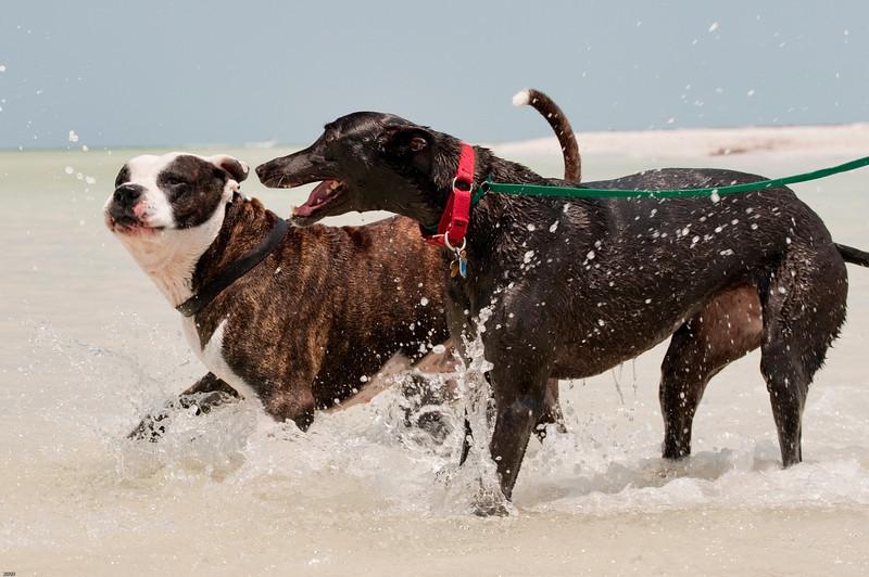 Dogs at Anclote