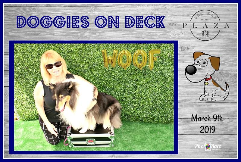 Doggys on Deck1.jpg