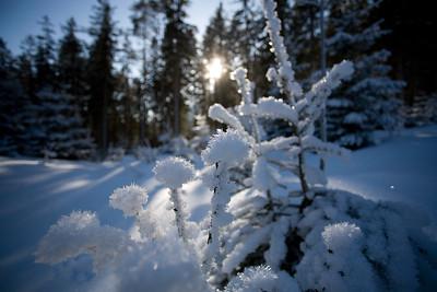 Grüner See im Winter 2007