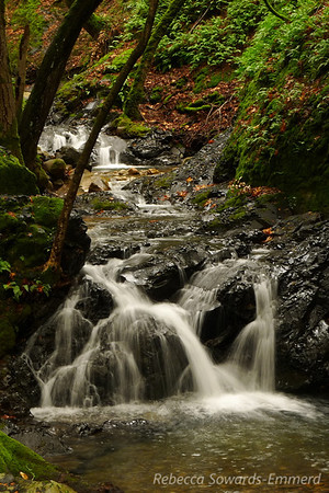 Uvas Canyon Waterfalls (12.16.2012)