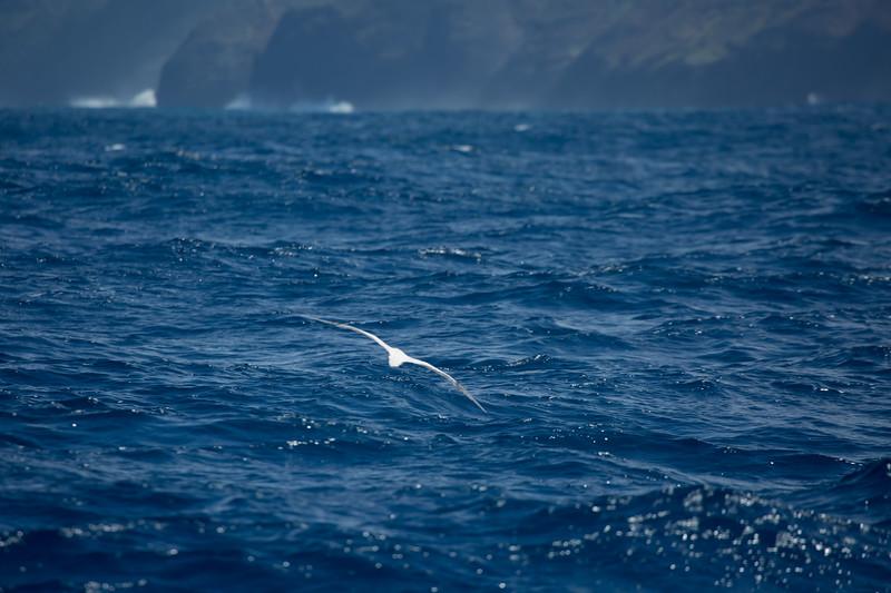 whales-leila-43.jpg