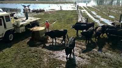 North & South Carolina Farm Bureaus Hurricane Florence