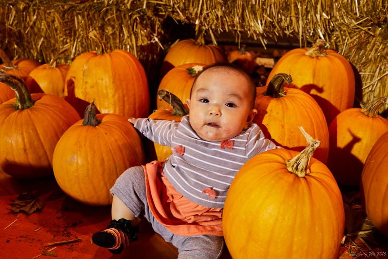 pumpkin__11.jpg