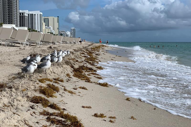 Miami 0433.jpg