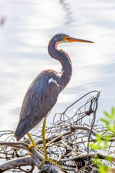 Birds of Merritt Island FL