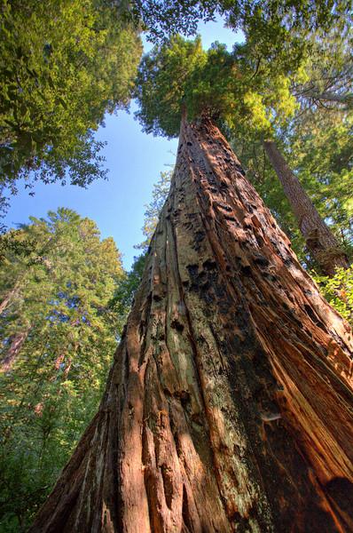 Big Basin Redwoods - Sept. 2007