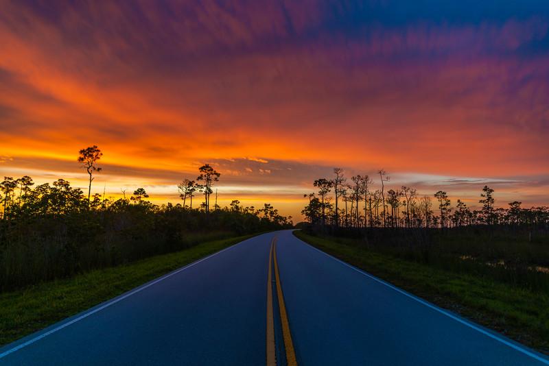 Everglades (2 of 60).jpg