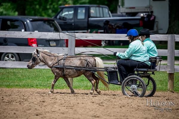 22. Mini Horse Driving Jr